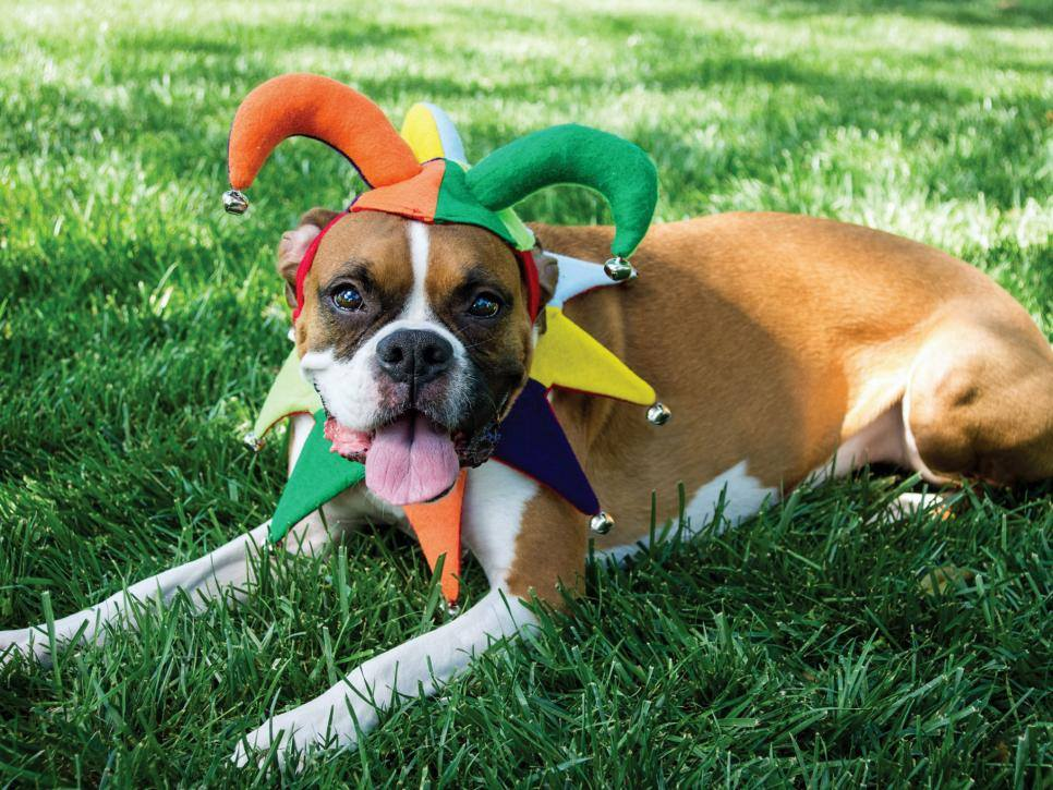 Ideas for dressing up dogs 2017
