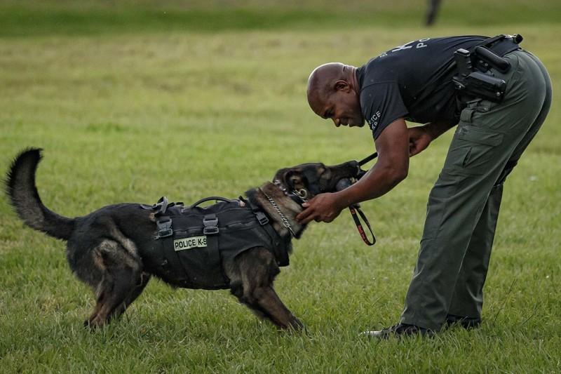 Dog Training Floroda
