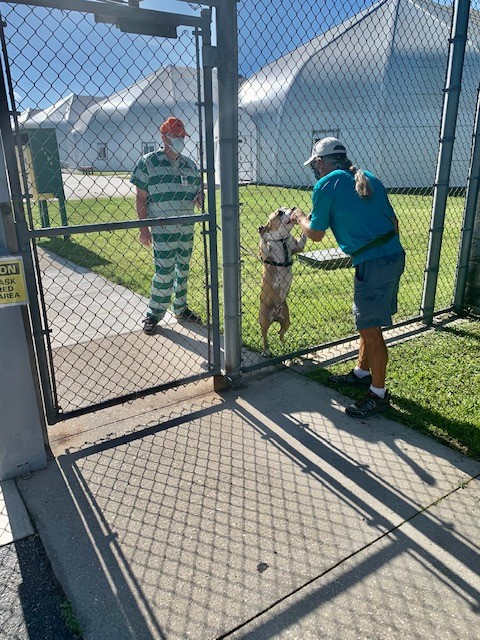 CAPE CORAL ANIMAL SHELTER PARTICIPATES IN THE LEE COUNTY SHERIFF'S OFFICE CELL DOG PROGRAM