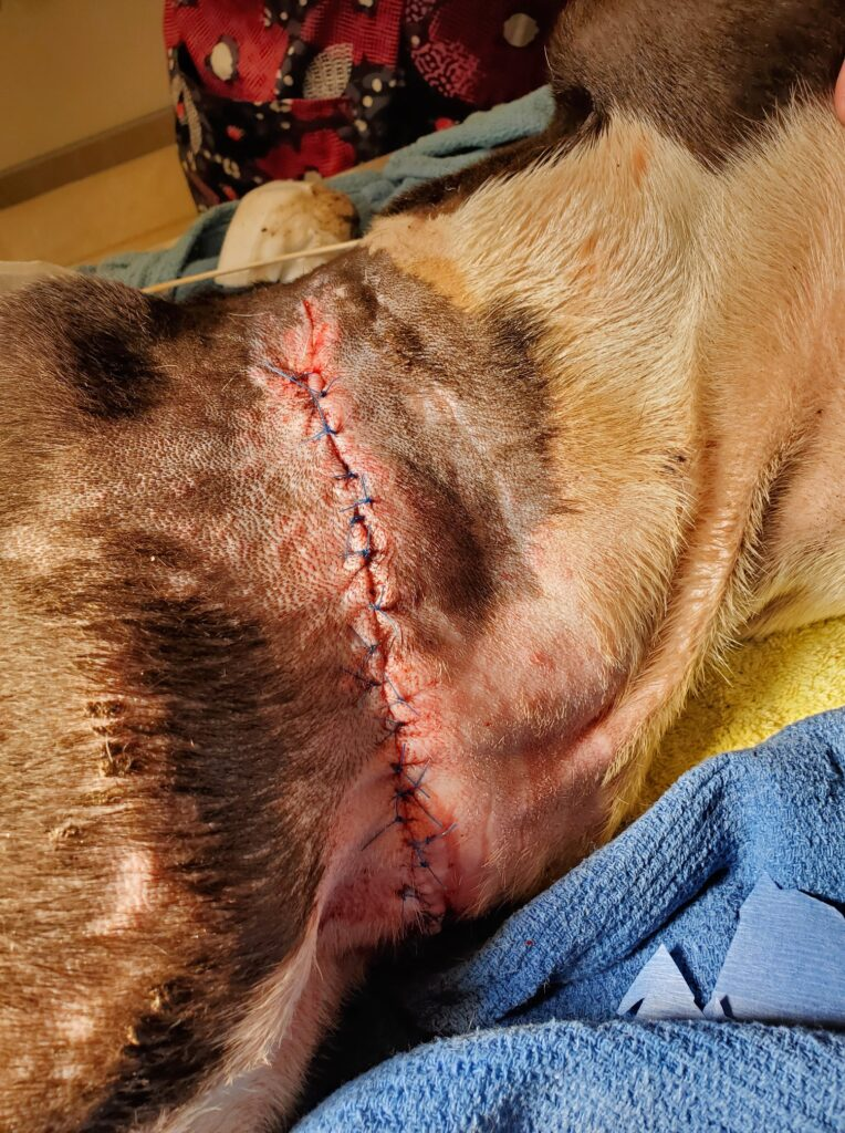 Cape Man Who Tethered Dog Arrested for Animal Cruelty