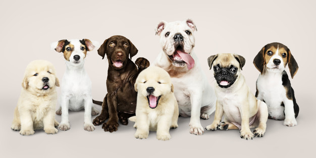 CAPE CORAL ANIMAL SHELTER RECEIVES ,000 GRANT FROM PETSMART CHARITIES® TO INCREASE ACCESS TO AFFORDABLE VETERINARY CARE