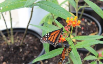 Palmview Memory Support Explores Magic of Monarch Butterflies
