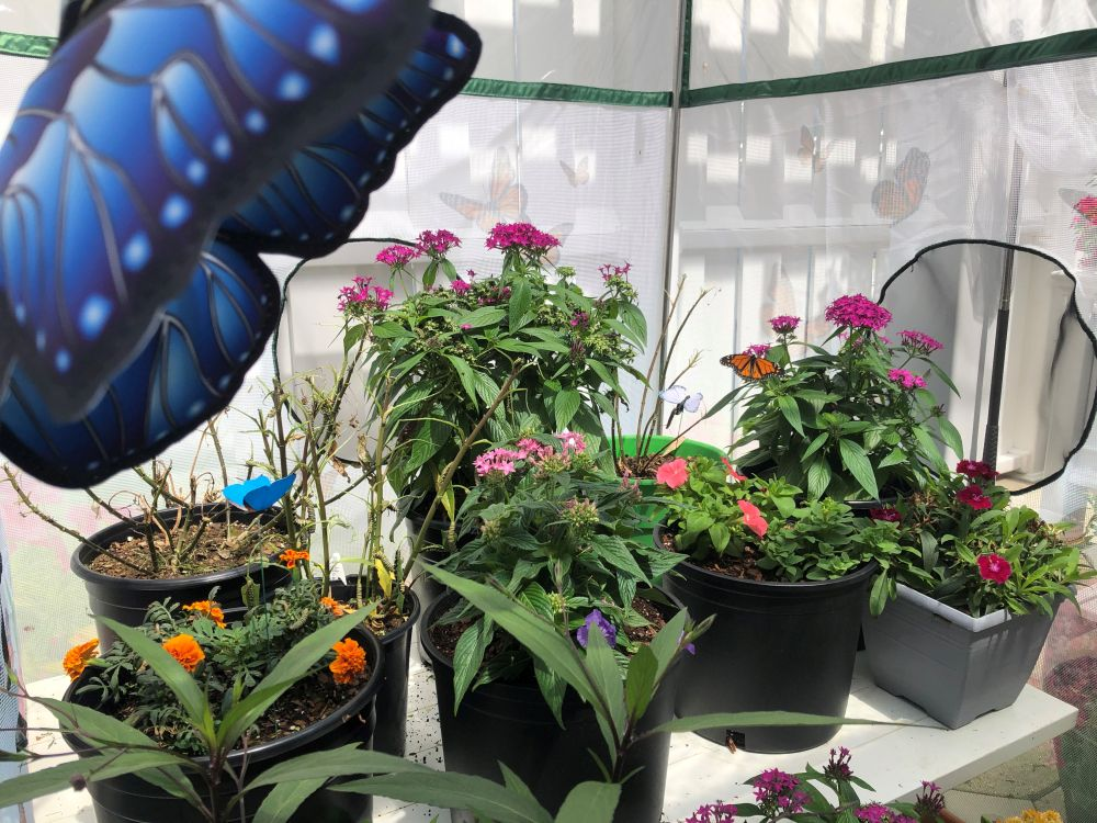 Palmview Memory Support Explores Magic of Monarch Butterflies