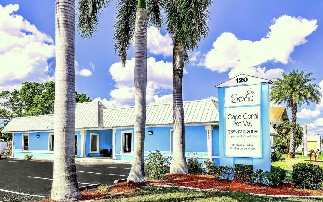 CAPE CORAL PET VET OPENS NEW CLINIC