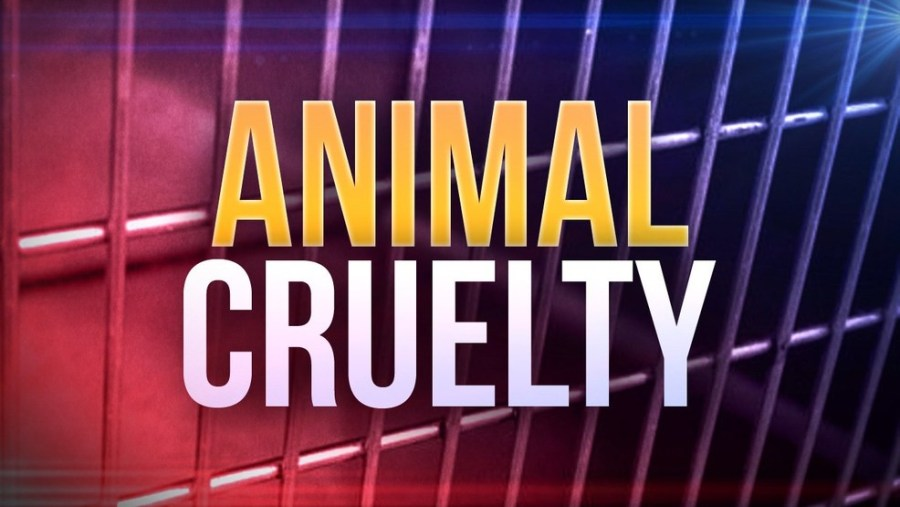 North Fort Myers Man Arrested for Animal Cruelty