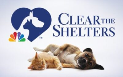 Lee County Domestic Animal Services to participate in Clear the Shelters
